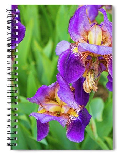 Royal Purple Irise Spiral Notebook