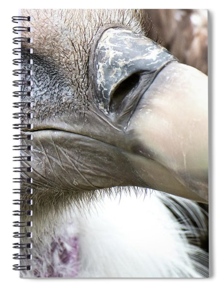 Ruppells Griffon Vulture Spiral Notebook