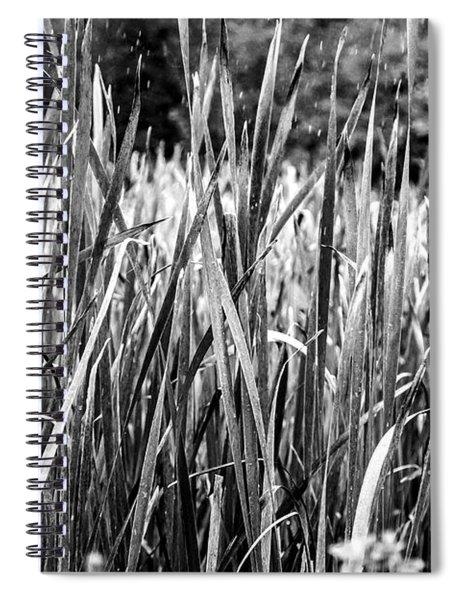 Rushes Rain Spiral Notebook