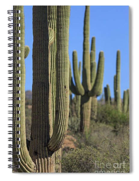 Saguaro Cactus In The Arizona Desert Spiral Notebook