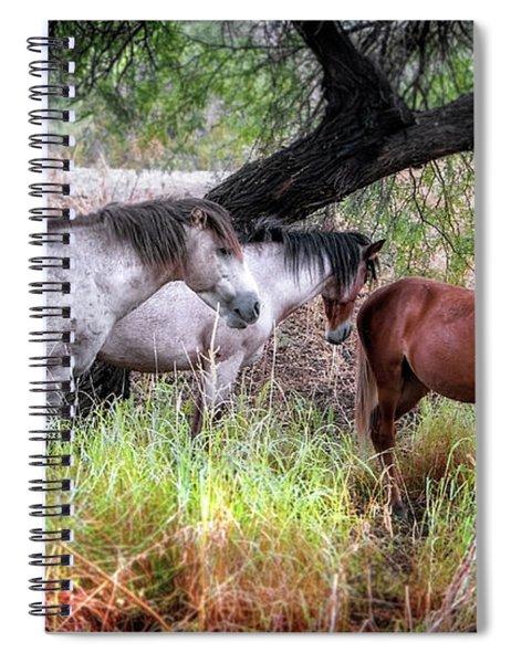 Salt River Wild Horses Spiral Notebook