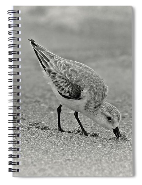 Sanderling Foraging For Food Spiral Notebook