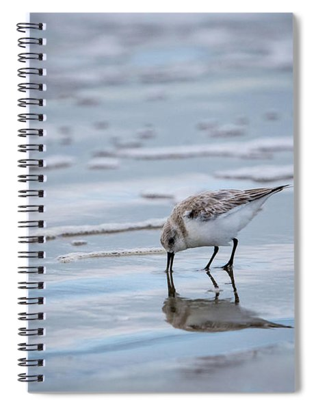 Sanderling Foraging Spiral Notebook
