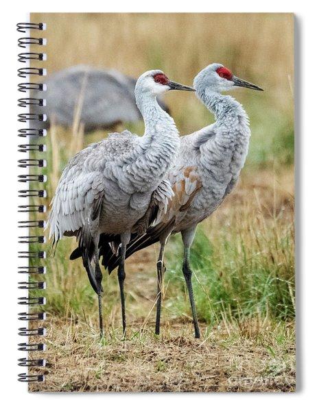 Sandhill Crane Pair Spiral Notebook