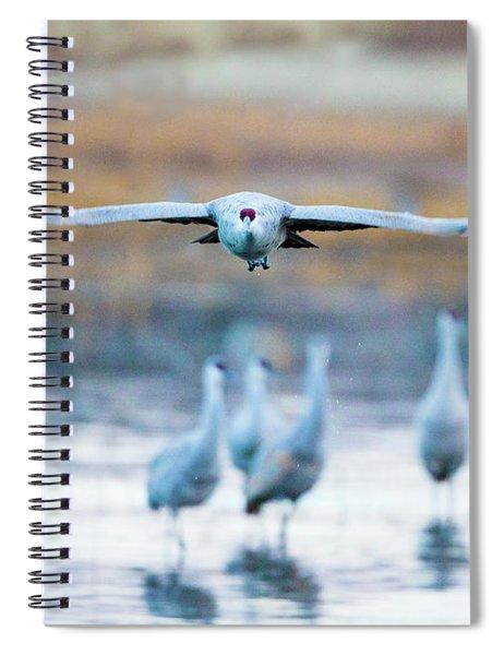 Sandhill Crane, Soccoro, New Mexico, Usa Spiral Notebook