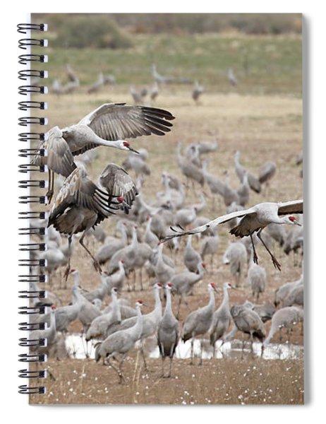 Sandhill Cranes Gather Spiral Notebook