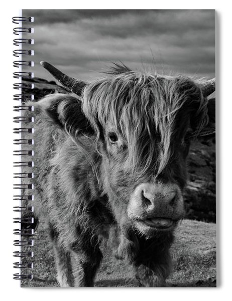 Saying Hello To A Highland Cow At Baslow Edge Black And White Spiral Notebook