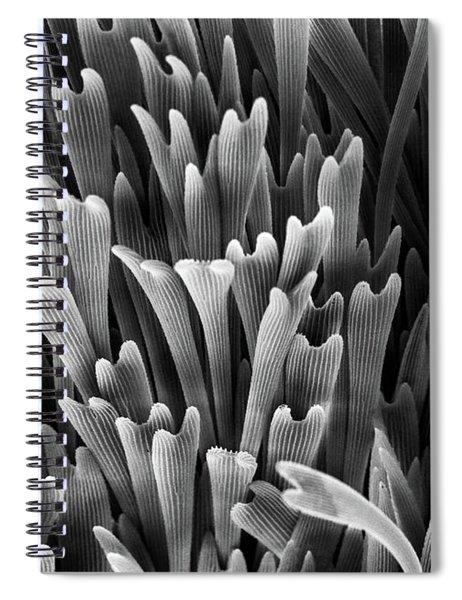 Scales Around Genitalia Spiral Notebook