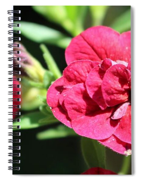 Scarlet Geranium In Cape May Spiral Notebook