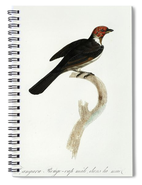 Scarlet Tanager Spiral Notebook