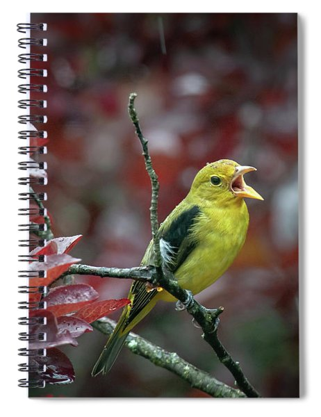 Scarlet Tanager Singing In The Rain Spiral Notebook