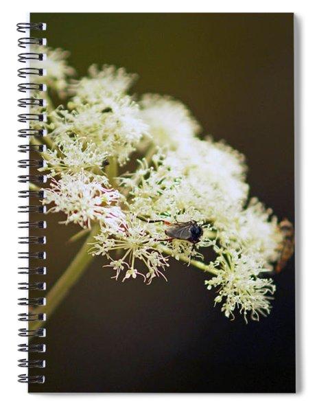 Scotland. Loch Rannoch. White Flowerhead. Spiral Notebook