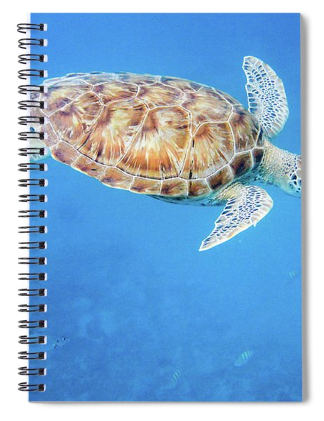 Sea Turtle And Fish Swimming Spiral Notebook