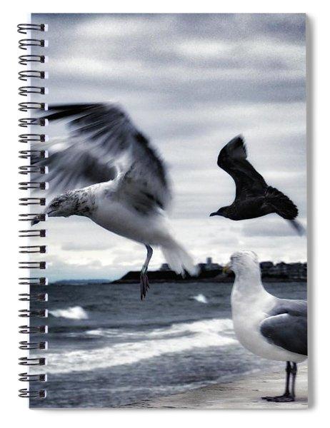 Seagulls Spiral Notebook