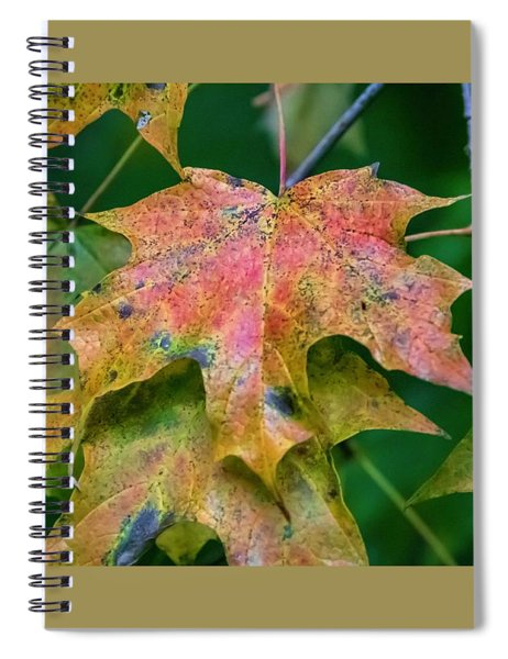 Seasonal Layering Spiral Notebook