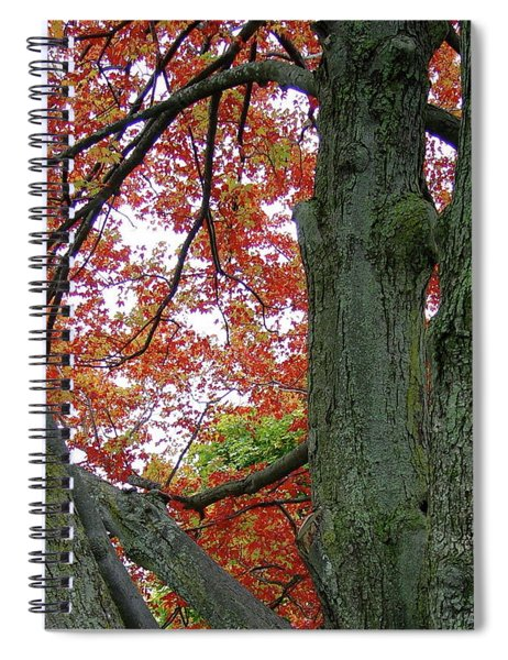 Seeing Autumn Spiral Notebook
