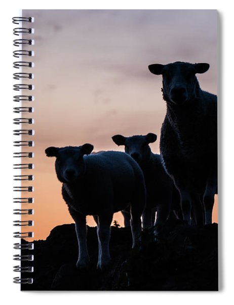 Spiral Notebook featuring the photograph Sheep Family by Anjo Ten Kate