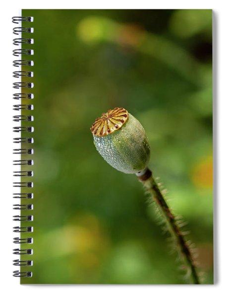 Shirley Poppy 2018-20 Spiral Notebook