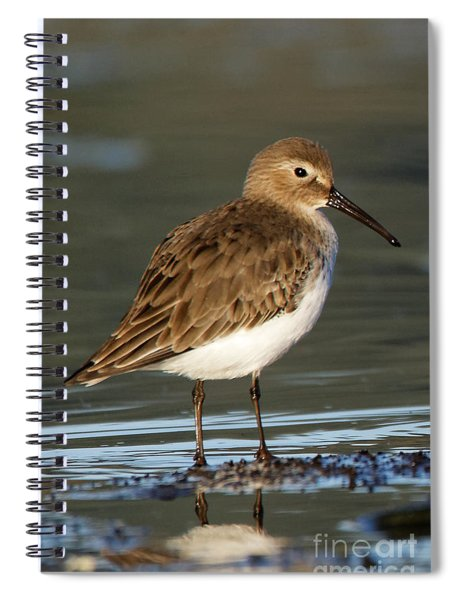 Shoreline Dunlin Spiral Notebook