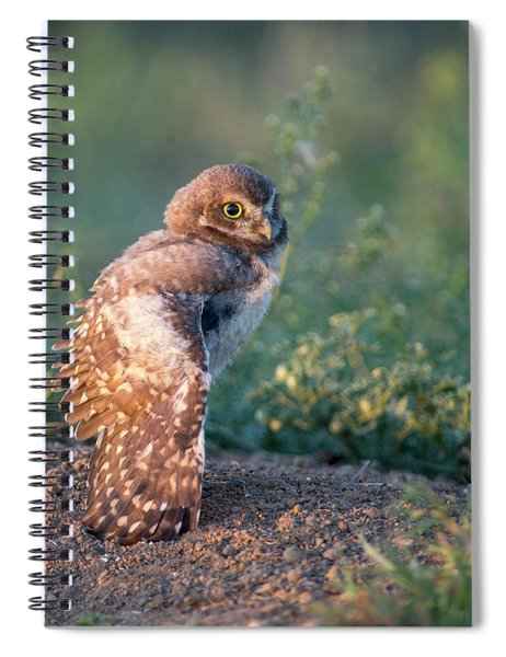 Shy Young Burrowing Owl Spiral Notebook