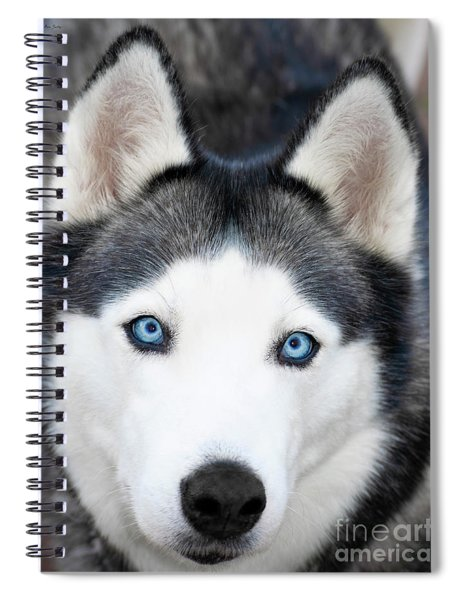 Spiral Notebook featuring the painting Siberian Husky Mask A91818 by Mas Art Studio