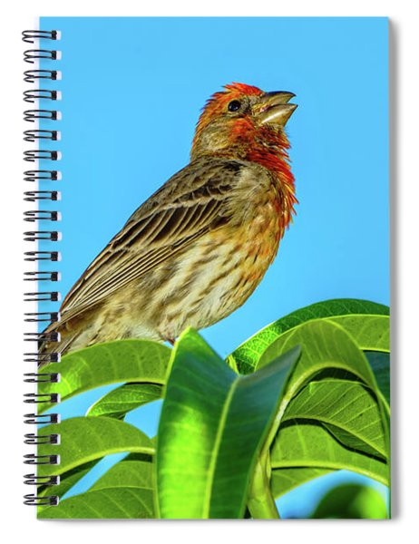 Singing House Finch Spiral Notebook