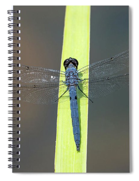 Slaty Skimmer Dragonfly Spiral Notebook