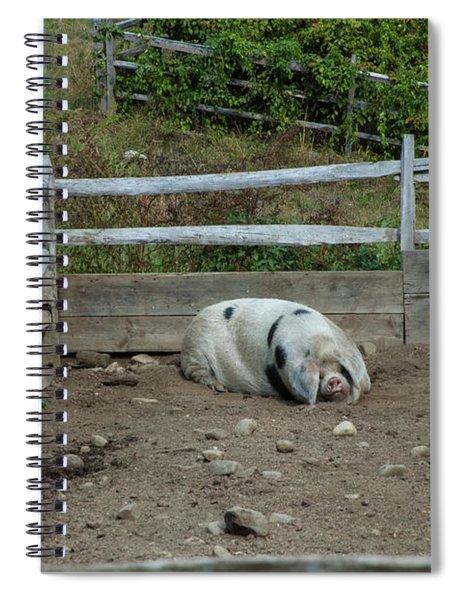 Snoozing Hog Spiral Notebook