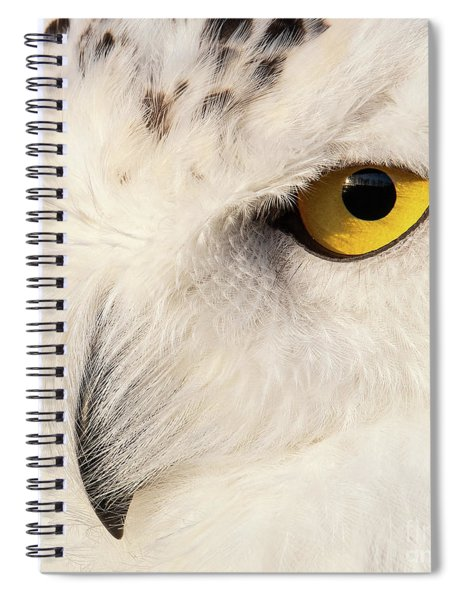 Snow Owl Eye Spiral Notebook