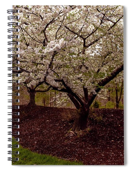 Snowy Cherry Blossoms Spiral Notebook