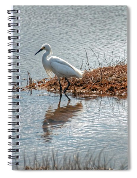 Snowy Egret Hunting A Salt Marsh Spiral Notebook