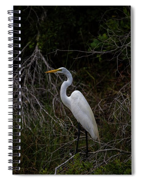 Snowy Egret On A Hot Summer Day Spiral Notebook