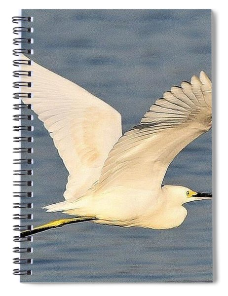 Snowy Egret Wings Spiral Notebook