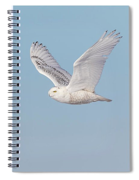 Snowy Owl 2018-23 Spiral Notebook