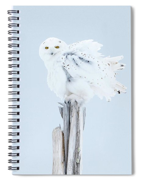 Snowy Owl Feather Shake Spiral Notebook