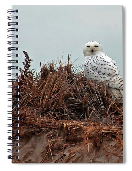 Snowy Owl In The Dunes Spiral Notebook