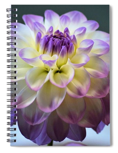 Spiral Notebook featuring the photograph Soft Focus Dahlia by Patti Whitten
