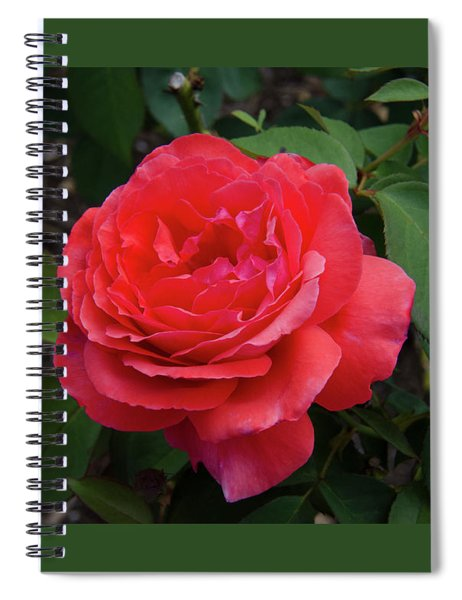 Solitary Rose Spiral Notebook