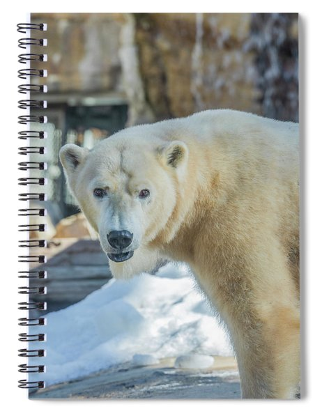 Someone's Hangry Spiral Notebook