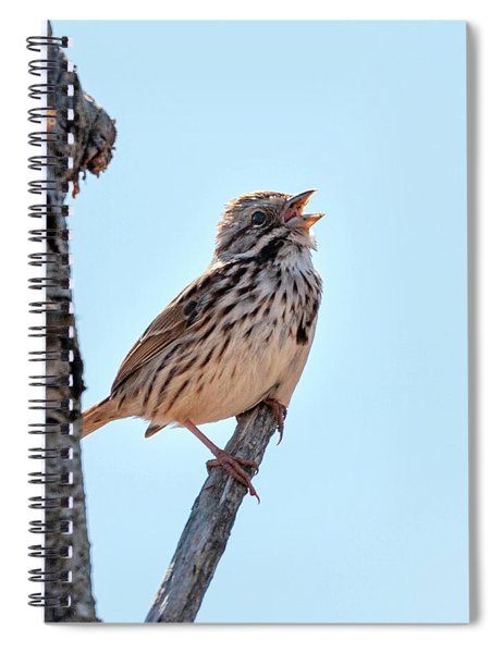 Song Sparrow Singing Spiral Notebook