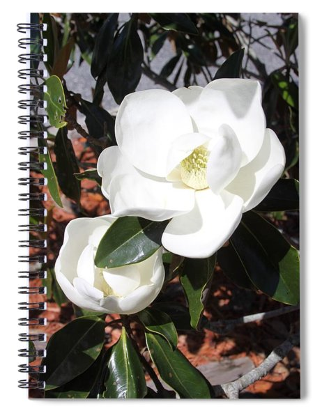 Sosouthern Magnolia Blossoms Spiral Notebook