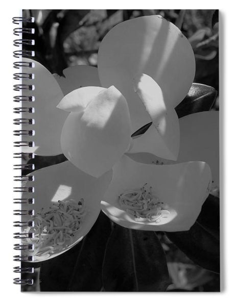 Southern Magnolia In Black And White Spiral Notebook