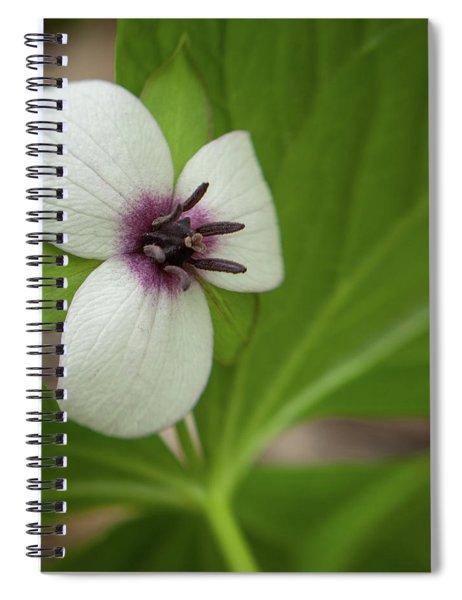 Southern Nodding Trillium 1 Spiral Notebook
