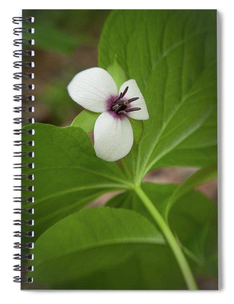 Southern Nodding Trillium 2 Spiral Notebook