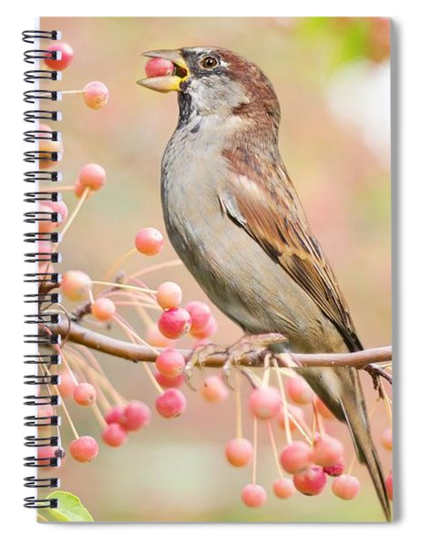Sparrow Eating Berries Spiral Notebook