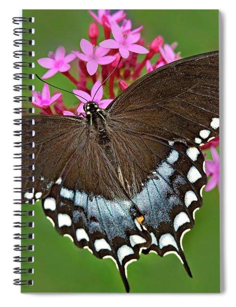 Spicebush Swallowtail Papilio Trollus Spiral Notebook
