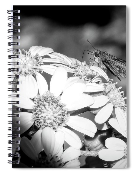 Spotlight To Pollinate Spiral Notebook