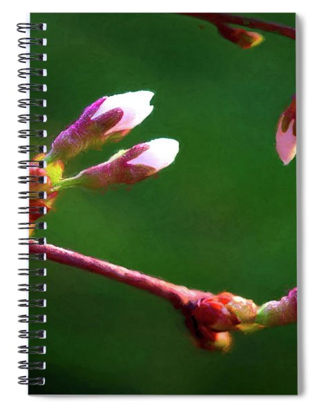 Spring Buds - Weeping Cherry Tree Spiral Notebook