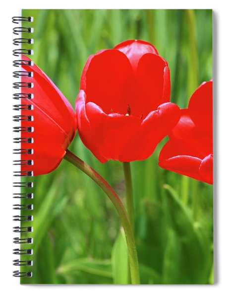 Spiral Notebook featuring the photograph Spring Trio by Emily Johnson