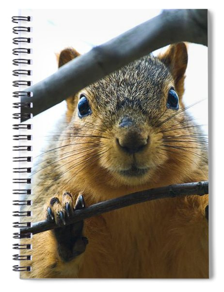 Spying Fox Squirrel Spiral Notebook